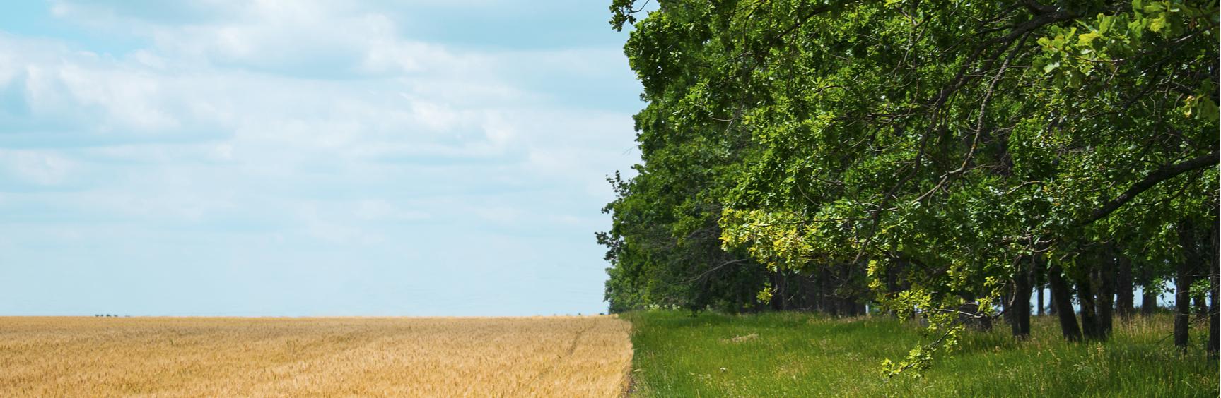 regenerative-farming-concept